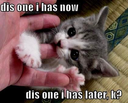 söta bilder på katter