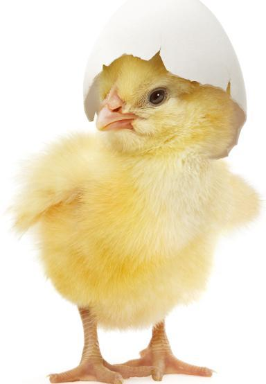 kyckling-glad-pc3a5sk