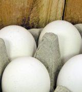Dag tre med äggfasta