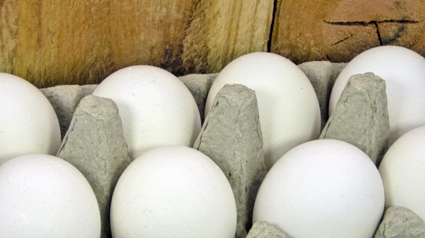 eggs-and-fence